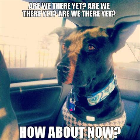 Impatient Meme - dogs wayward dogs page 11