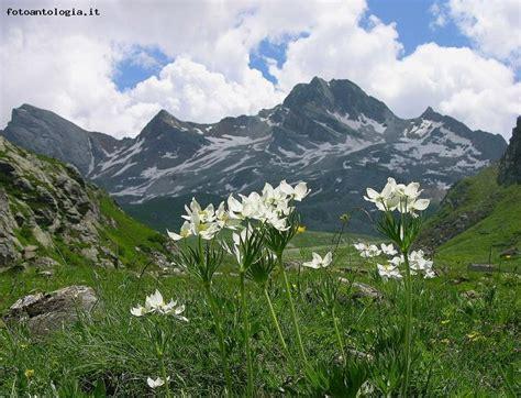 quel mazzolin di fiori testo mazzolin di fiori fiori idea immagine