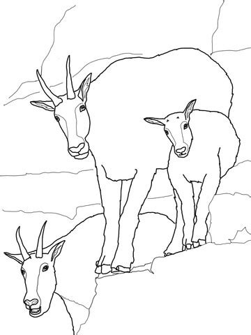 mountain goat baby with family coloring page