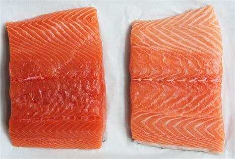 farm raised salmon color something fishy farm raised vs fish