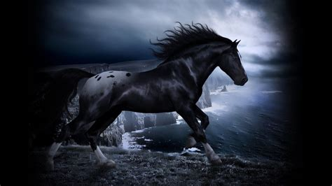 wallpaper hd black horse black horse wallpapers for laptops 2293 amazing wallpaperz