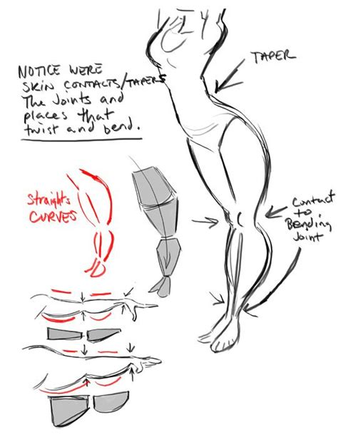 layout and animation techniques for watchkit the art of dave pimentel tapering body shapes art ref