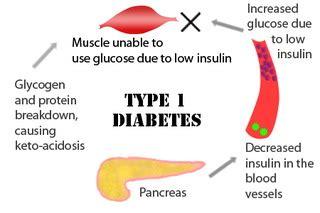 diabetes mellitus pathophysiology flowchart diabetes mellitus pathophysiology flow chart mellitus