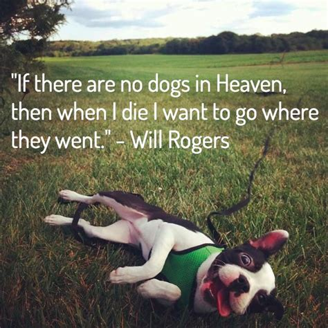 comforting quotes about death of a dog 13 dog loss quotes comforting words when losing a friend