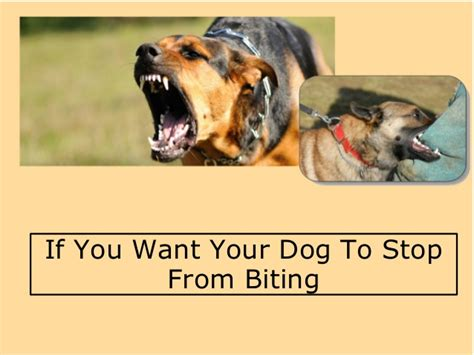 how to stop your puppy from biting you if you want your to stop from biting
