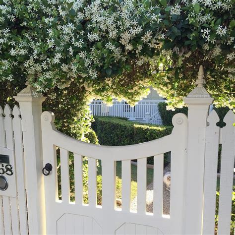 beautiful front gate    star jasmine