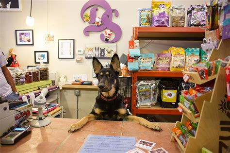 pet store pet stores in chicago for leashes cat collars and more