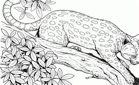 Realistic Cheetah Coloring Pages by Displaying Printable Cheetah Pictures Image Gallery On