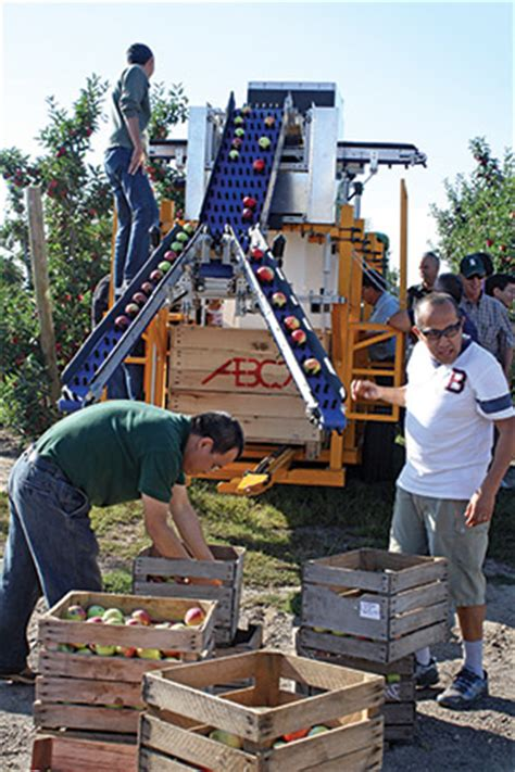 Lu Opple in orchard sorting fruit grower