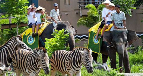 bali elephant ride tour bali elephant ride