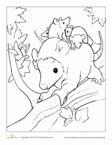 an opossum colouring pages sketch coloring page