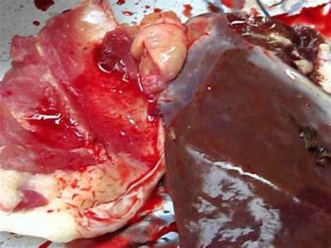 Cacing Klaten cacing hati ditemukan pada hewan qurban di wedi