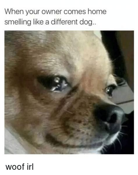 keep house from smelling like dog bad dog owner memes pictures to pin on pinterest pinsdaddy