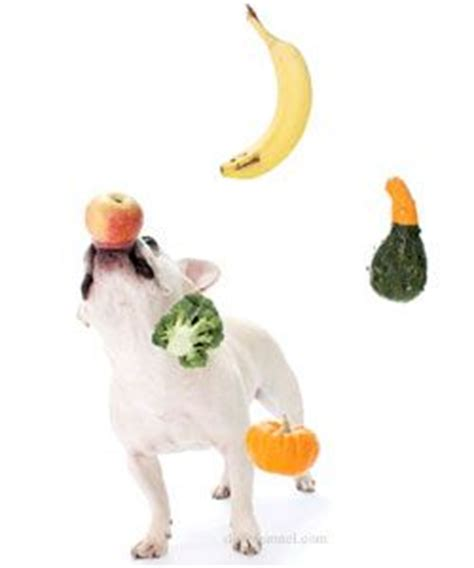 dogs and oranges can dogs eat fruits see what fruits are safe and healthy for your i feed my baby