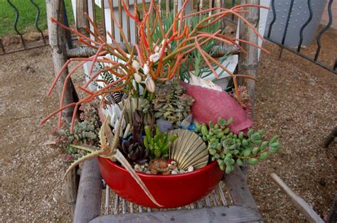 succulent containers for sale 28 best images about mission gift shop on pinterest