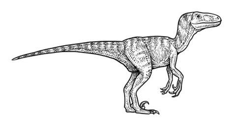 Photos, illustrations et vidéos de velociraptor
