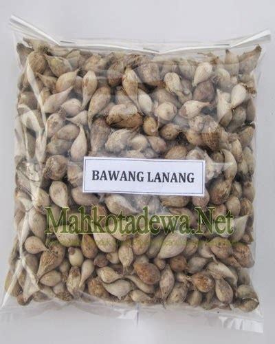 Bawang Putih Lanangtunggal 9 khasiat bawang putih tunggal lanang untuk kesehatan bawang putih tunggal bawang lanang