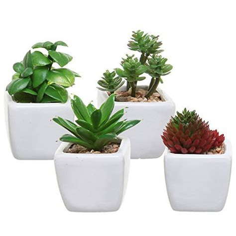 plants for desk office desk plant amazon com