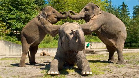 fotos de mam 237 feros fotos de elefantes con ratones ratona con bebes ratones