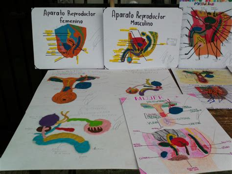 imagenes trabajo escolar los cibers 2013 trabajos escolares quot aparato reproductor