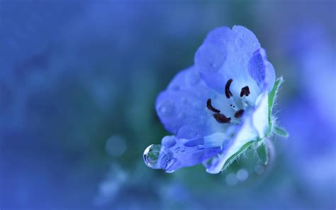pretty wall paper download pretty blue flower wallpaper 41045 1920x1200 px