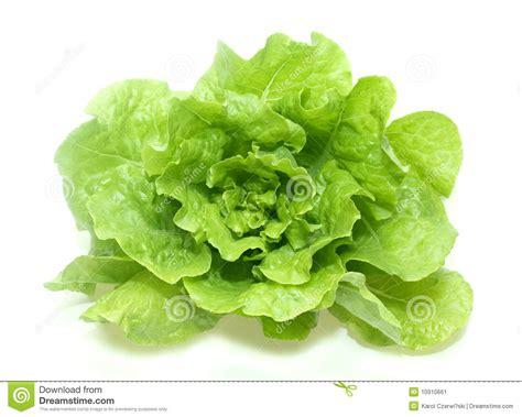 imagenes lechugas verdes lechuga verde de la mantequilla imagen de archivo imagen