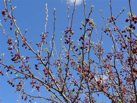 when should you spray fruit trees s garden when to spray fruit trees