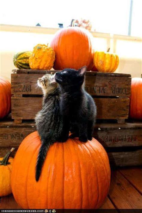 pumpkin cats cat pictures - Cat And Pumpkin