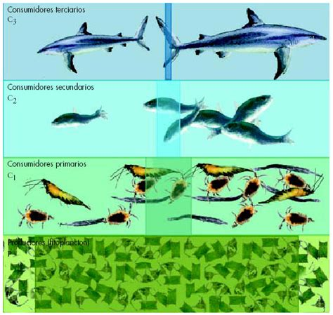 cadena alimenticia acuatica descomponedores la materia y la energ 205 a en los ecosistemas