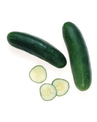 dogs and cucumbers dogs cucumbers care the daily puppy