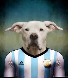 chiens coupe du monde 2014 dogue argentin tuxboard