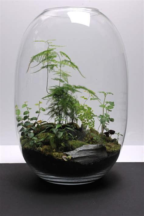 Glass Teardrop Vase Best 25 Terrarium Plants Ideas On Pinterest Terrarium
