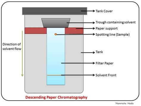 How To Make Chromatography Paper - b for biology chromatography paper chromatography