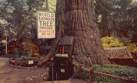 famous tree houses world famous tree house redwoods ca