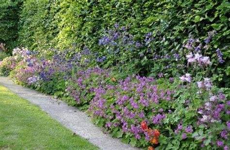 Garten Schatten Welche Pflanzen by Bunte Schatten Pflanzen Im Garten Vor Einer Hecke Garten