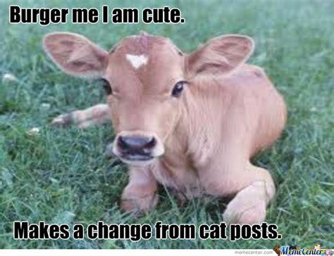 Calves Meme - cute calf by docphil001 meme center