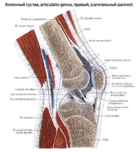 болит колено внутри