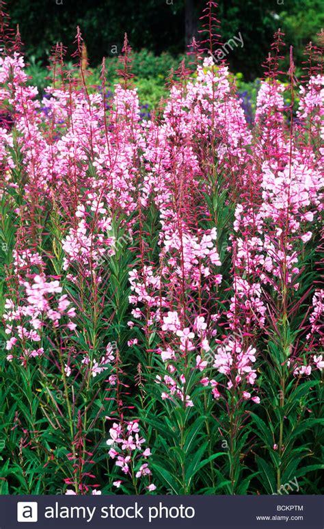 Garten Blumen Pflanzen 1734 by Stahl Stockfotos Stahl Bilder Alamy