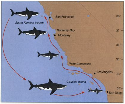 hooper we re gonna need a bigger boat cal poly bio 502 the biology of jaws we re gonna need a