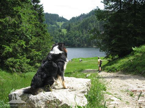 wandlen zum lesen bergwandern mit hund tourenvorschl 228 ge wandern mit hund