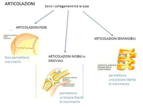 articolazione mobile ossa e scheletro ppt scaricare