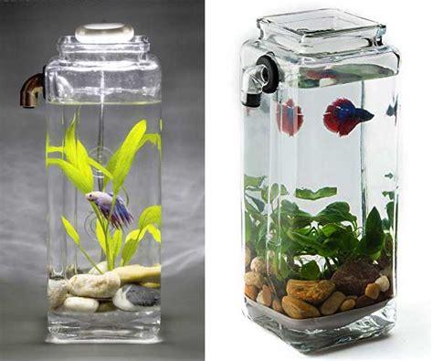 Aquarium Khusus Cupang model model aquarium unik untuk ikan cupang hias kecil