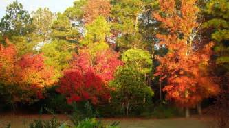 fall colors new the cupboard new bern s beautiful fall foliage