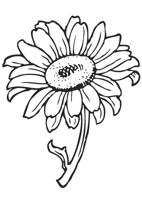 coloring pictures of sunflowers sunflower coloring page coloring home