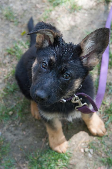 best age to get a puppy the best age to start is