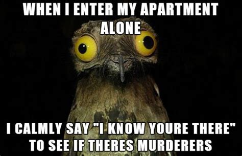 Funny Owl Memes - i don t know what i ll do if i ever get an answer the