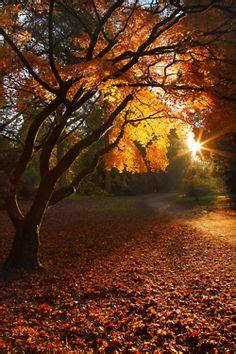Hamac Bébé Nature Et Découverte by Automne Autumn Paysage Paysages Magnifiques En 2018