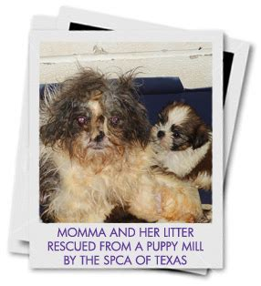 puppy mill statistics spca of puppy mills take the puppy pledge spca of