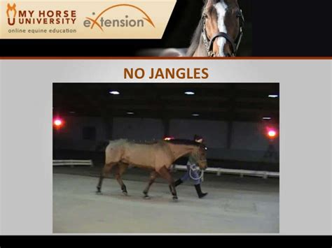 rehabilitating  lame horse stubbs