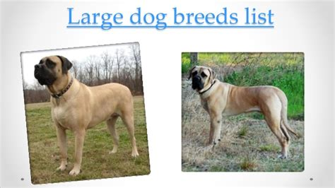 large breeds list large breeds list